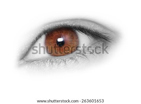 Brown eye isolated on white background - stock photo