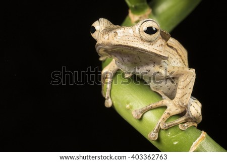 brown frog sitting on bamboo branch - stock photo