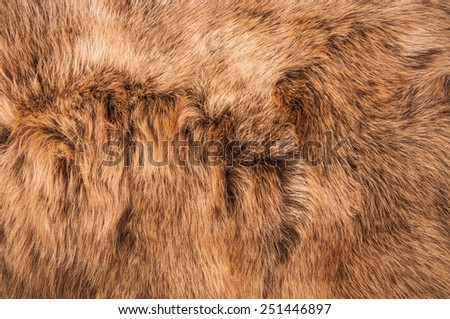 Brown Fur Natural, Wolf Fox, Animal Wildlife Hair Fur / Concept and Idea Style for Background, textures and wallpaper. Close up Full Frame. - stock photo