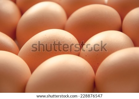 Brown hens eggs close up on a white background - stock photo
