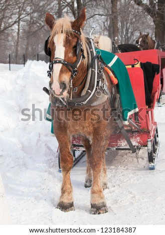 Brown horse and red sleigh in winter - stock photo