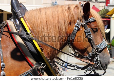 Brown horse dragging a carriage - stock photo