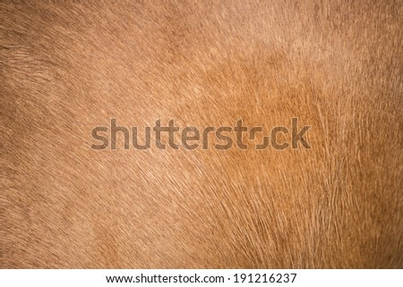 Brown horse fur background - stock photo