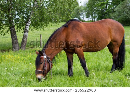 Brown horse in the meadow - stock photo