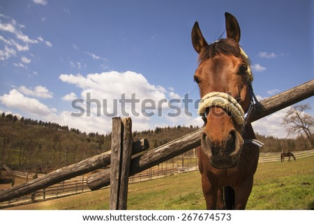 brown horse in the park - stock photo