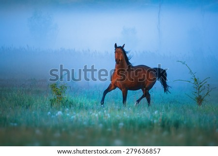 Brown horse is running throw the strong fog - stock photo
