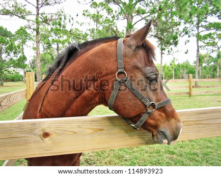 Brown horse looking out of pasture over wooden fence - stock photo