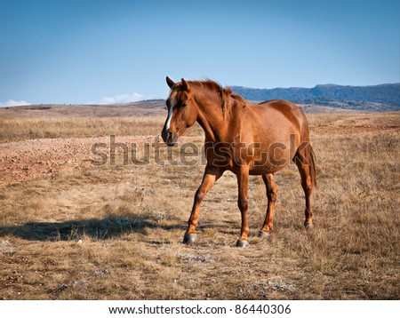 brown horse on a field against the mountains - stock photo