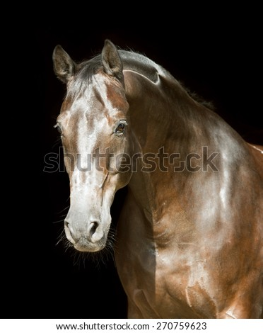 Brown horse on the black background - stock photo