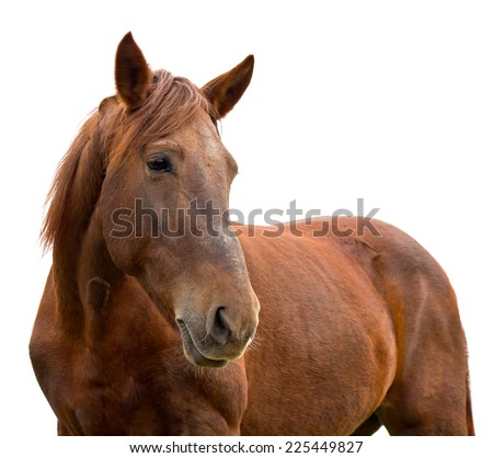 Brown horse on white background - stock photo