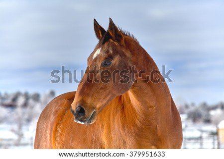 Brown Horse profile against a snow covered background with snow on his nose - stock photo