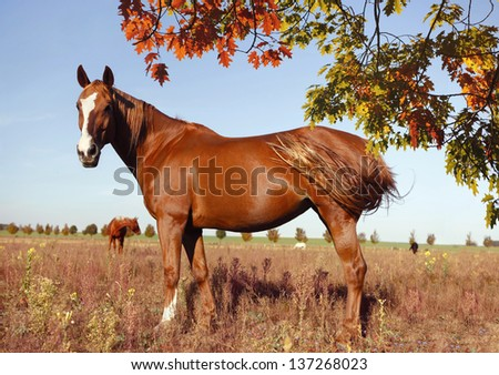 brown horse stands in a meadow and looks - stock photo