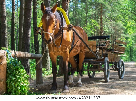 Brown horse with cart in the forest. - stock photo