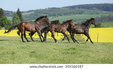 Brown horses running in group together - stock photo
