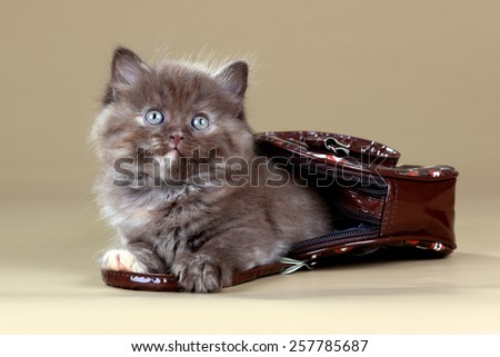 Brown kitten hiding in a bag - stock photo