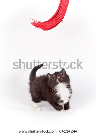 brown kitten playing with red tassel on white background - stock photo