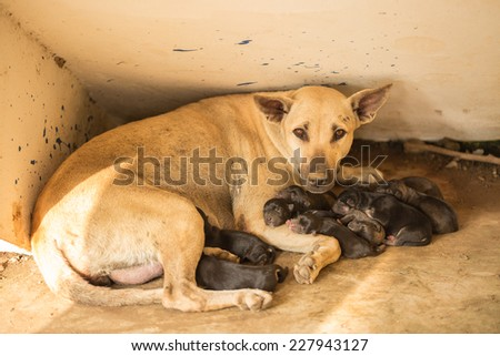Brown mom and black puppies  - stock photo