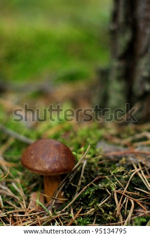 Brown mushroom in green moss - stock photo