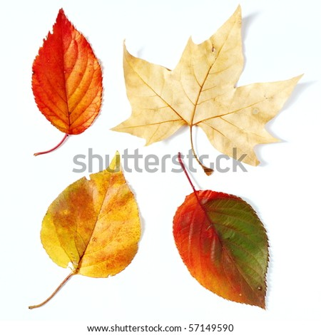 Brown, orange and red fall leaves on white background - stock photo