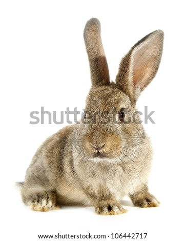 Brown rabbit bunny isolated on white background - stock photo