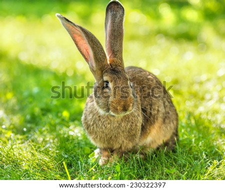 Brown rabbit sitting in grass in sunny garden - stock photo