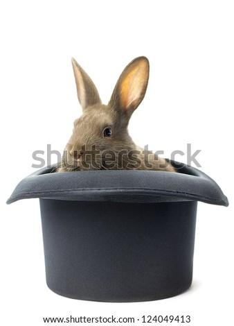Brown rabbit staring inside the black hat - stock photo
