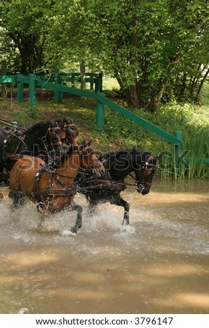 brown racehorses - stock photo
