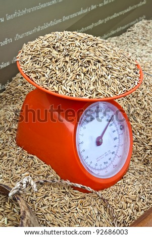brown rice paddy on kitchen scale - stock photo