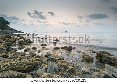 brown seaweed algae on rock in sunset - stock photo