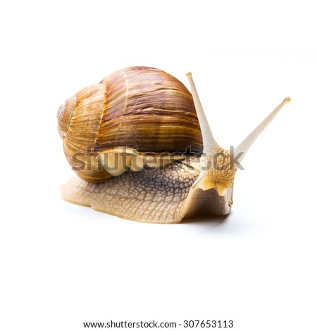 brown Snail looks interesting - stock photo