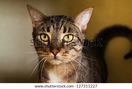 Brown Tabby Cat Looking at You - stock photo