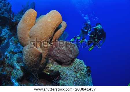 Brown Tube Sponges with Divers, Grand Cayman - stock photo