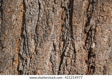 Brown with a Touch of Orange Textured Tree Trunk for Background and Copy Space - stock photo