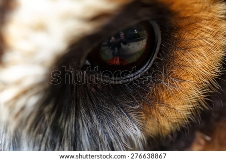 Brown wood owl detail close up eye - stock photo