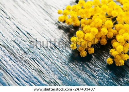 Brunches of mimosa (silver wattle) on wooden background - stock photo