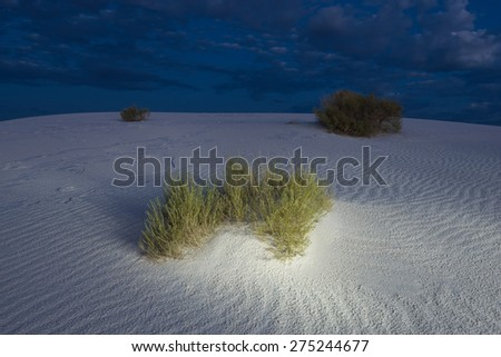 Brush growing on sand dunes at dusk in The White Sand Dunes National Monument, New Mexico, USA. - stock photo