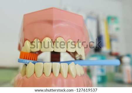 Brush your teeth, plastic dentures, used by dentists to show you how to brush correct your teeth - stock photo