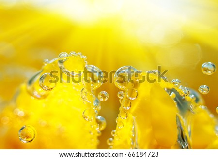 Bubbles of air on yellow petal - stock photo