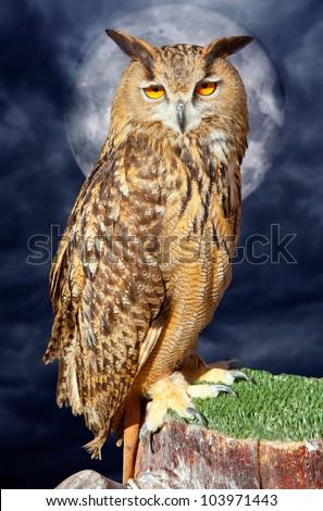 Bubo bubo eagle owl night bird in full moon cloudy dramatic night [ photo-illustration] - stock photo