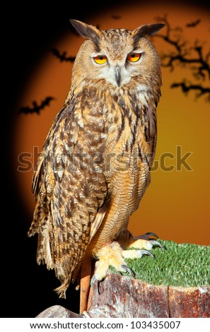 Bubo bubo eagle owl night bird in halloween bat orange background - stock photo