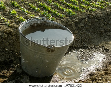 bucket full of water near vegetable bed - stock photo