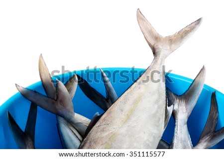 Bucket with fresh fish on white background - stock photo