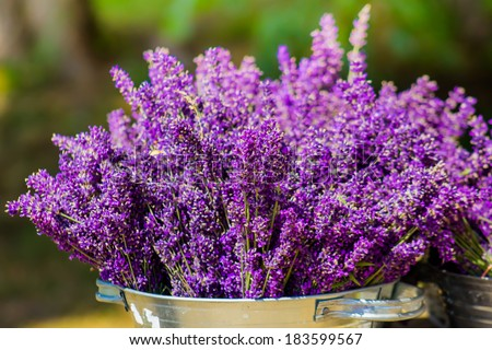 Bucket with lavender - stock photo
