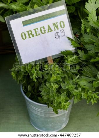 Buckets of fresh oregano at farm market. - stock photo