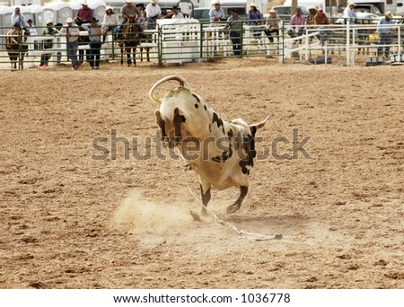 Bucking action after the rider had been thrown during the bull rinding competition at a rodeo. - stock photo