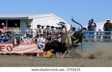 Bucking Bull Riding - stock photo