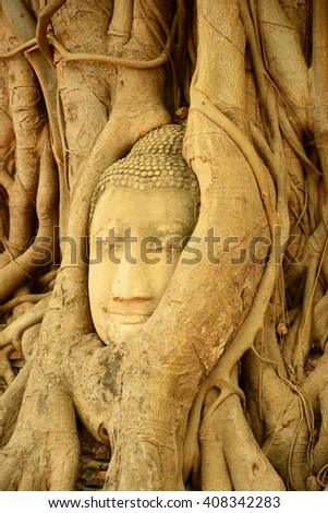 Buddha head encased in tree roots,Thailand  - stock photo