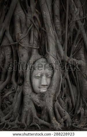 Buddha Head statue hidden in the banyan tree roots. Ancient sandstone sculpture at Wat Mahathat. Ayutthaya, Thailand. - stock photo
