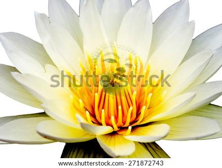 buddha on white lotus - stock photo