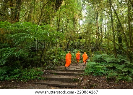 Buddhist monks in misty tropical rain forest. Sun beams shining through trees at jungle landscape. Travel background at Doi Inthanon Park, Thailand - stock photo